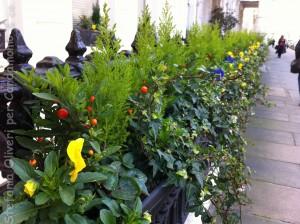 Londra fiori