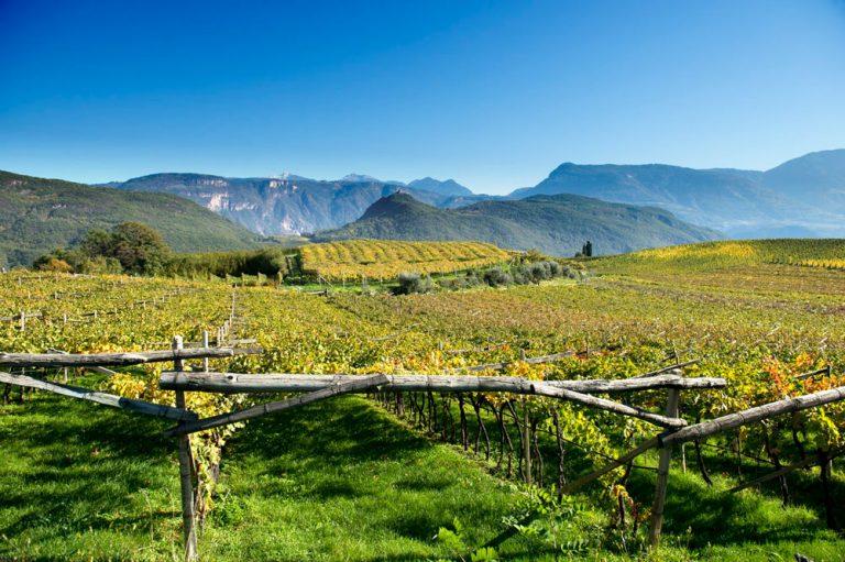 Caldaro, Alto Adige - Cardamomo & co